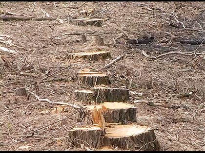 5_years_imprisonment_and_30_000_uah_compensation_for_illegal_logging_preview_medium