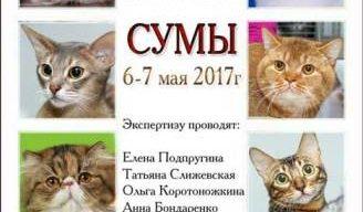 У Сумах відбудеться котячий чемпіонат України
