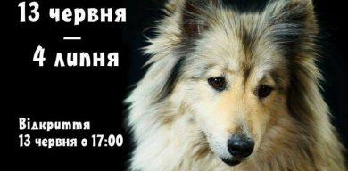 У Сумах відкриваться фотовиставка собак