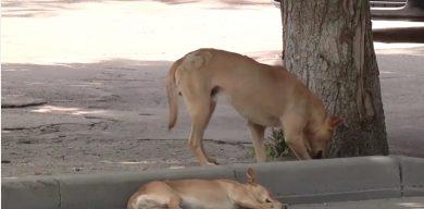У сумському дворі собаки погризли трьох дітей