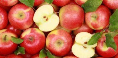У Сумах проведуть яблуневий ярмарок