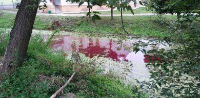 У Сумах озеро перетворилося на борщ