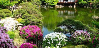 Сумчанам покажут «Японские сады»