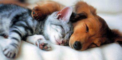 В Сумах відбудеться благодійна виставка собак