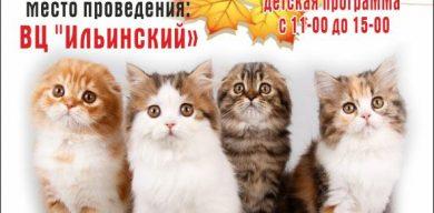 На выходных в Сумах – выставка кошек