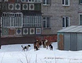 dogs-e1522319308246