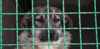 В Сумах заработало КП для животных