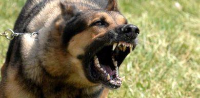 У 12-річної дівчинки розрив щоки після укусу собаки
