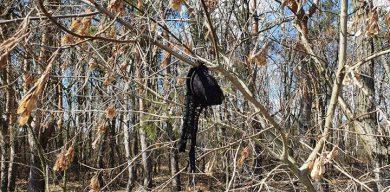 Де в Сумах ліфчики висять на деревах?
