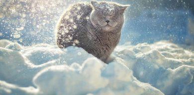 Сніг знову йде до України: прогноз погоди на кінець грудня